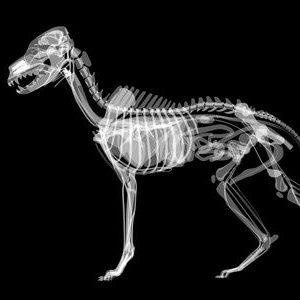 radiologie_veterinaire